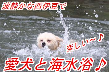 QOYI8t6Z_20130706025815.jpg