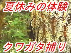 miyama_20130706025816.jpg