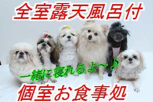 wanwanb1.jpg