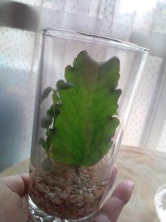 moblog_4ea4db3b.jpg