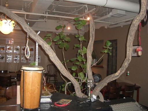 ベジタブル・カフェ ラッシュ 店内のツリー