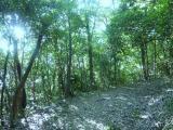 木漏れ日がもれる 登山道