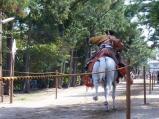 疾走馬から弓を射る