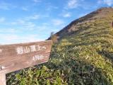 7:35 この登りはキツイ 絶景に助けられて…
