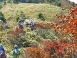 山頂で唯一 紅葉が残った木??