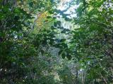 稜線の歩道 常緑樹が多い中、落葉樹の紅葉