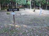 大坊主の足跡
