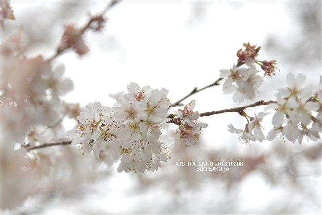 DSC_1480a-m.jpg