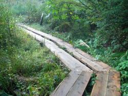 湿地帯の木道