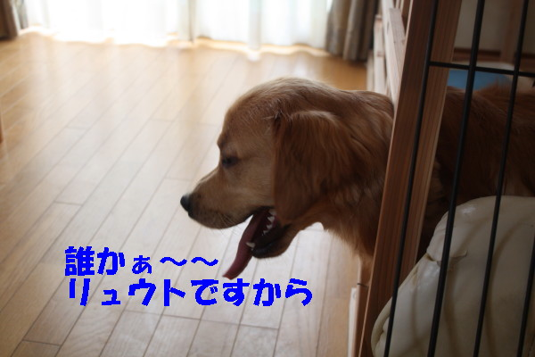 bu-100240001.jpg