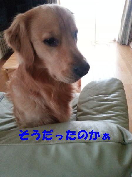 bu-100600001.jpg