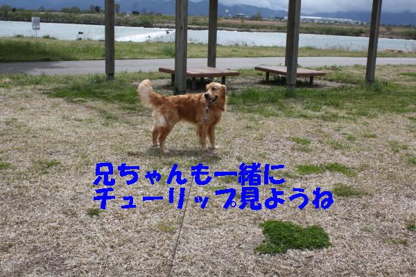 bu-100650001.jpg