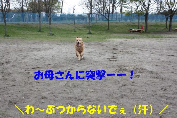 bu-100680001.jpg