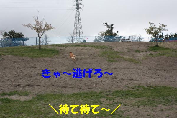 bu-100690001.jpg