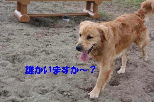 bu-100720001.jpg