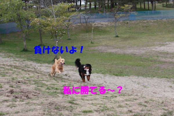 bu-100750001.jpg