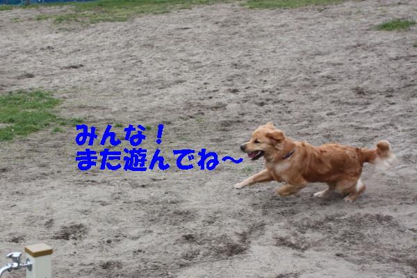 bu-100850001.jpg