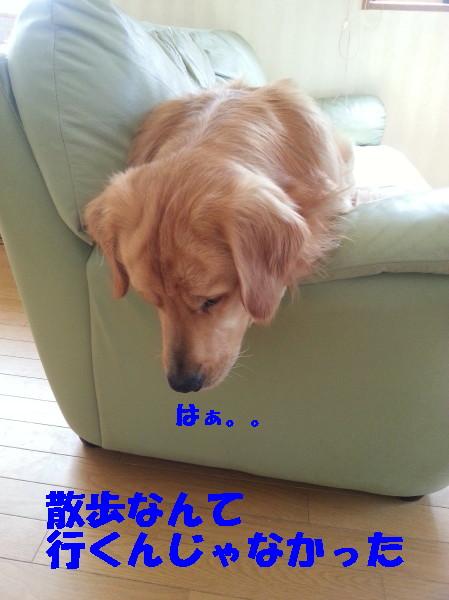 bu-100900001.jpg