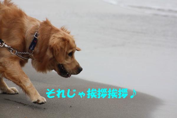 bu-101040001.jpg