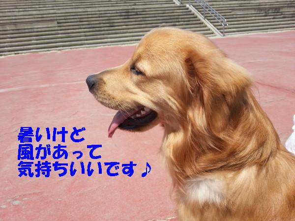 bu-101570001.jpg