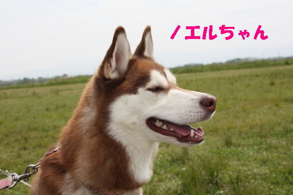 bu-101770001.jpg