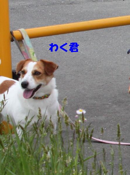 bu-101780001.jpg