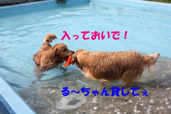 bu-102190001.jpg