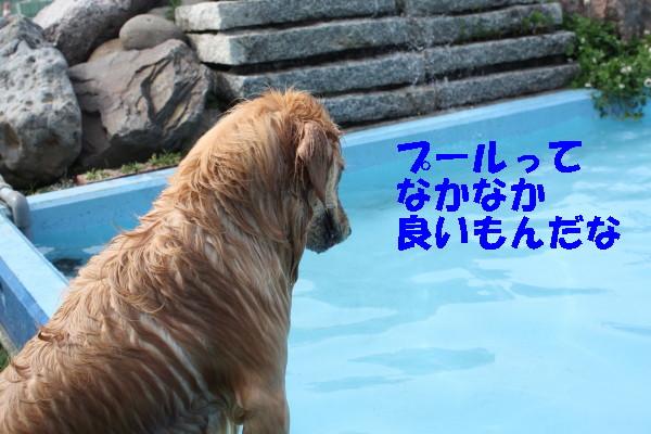bu-102290001.jpg