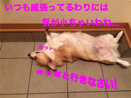1_20140926103532f0b.jpg