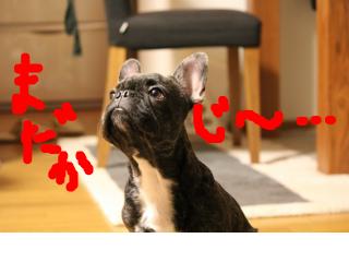 snap_kotetsu0525_20111106474.jpg