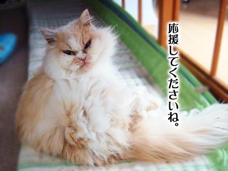 ぶーこ2013.1.24①