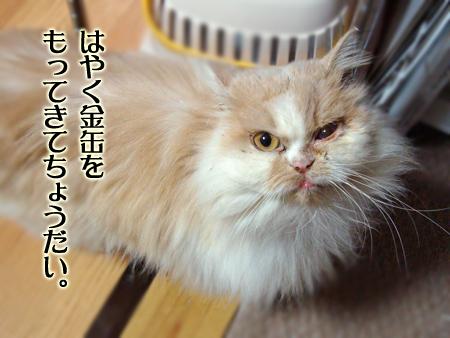 ぶーこ2013.1.24④