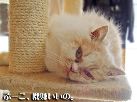 ぶーこ2013.1.27①