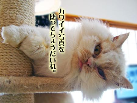 ぶーこ2013.1.27②