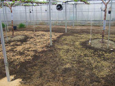 竹粉比較1