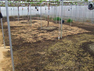 竹粉比較2