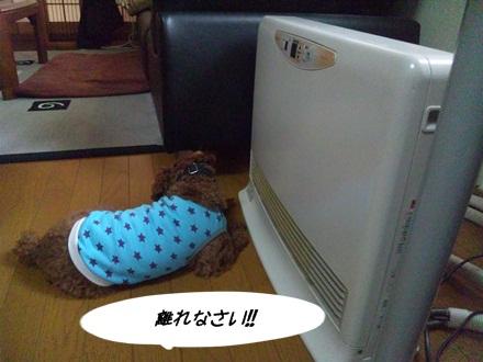 001_20111115225357.jpg