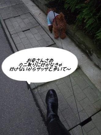 003_20111107223333.jpg