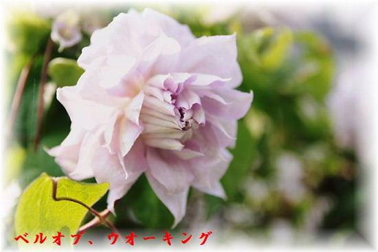 IMG_0024.jpg