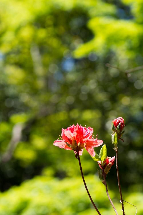 Photo-119.3