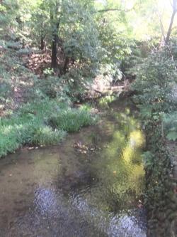 野川の源流
