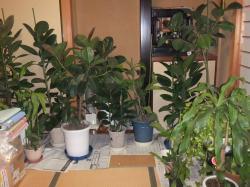 和室の植木