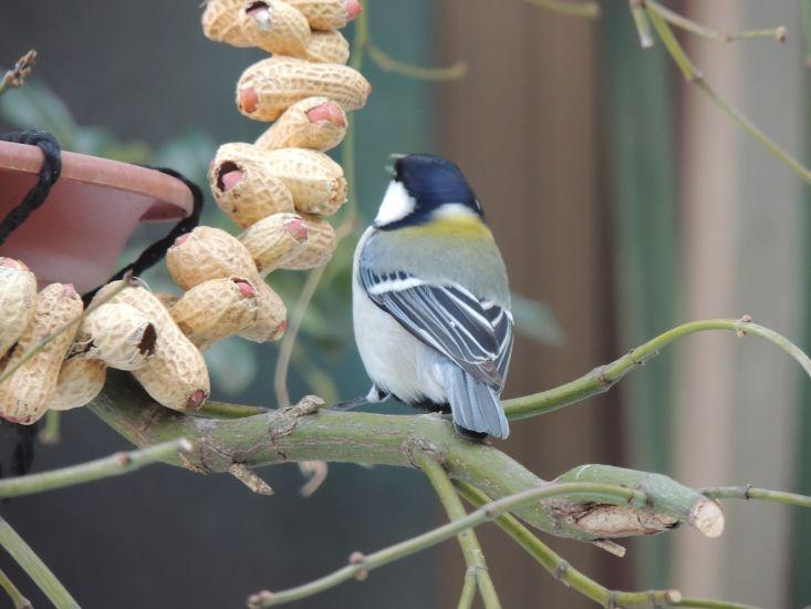 鳥さん003