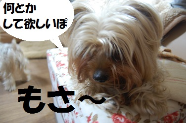 dog12_20130418074102.jpg
