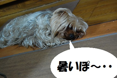 dog13_20130418074104.jpg