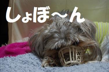 dog14_20130429042356.jpg