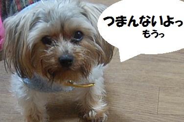 dog16_20130429042406.jpg