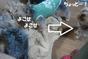dog17_20130429042407.jpg