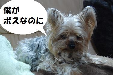 dog2_20130402032224.jpg