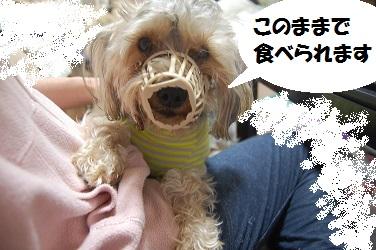 dog4_20130402032226.jpg